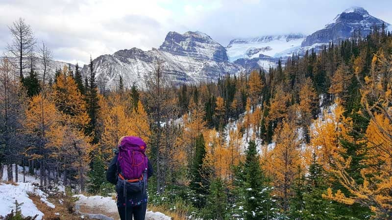 Looking at the orange larch trees on the Larch Valley hike in Lake Louise in fall