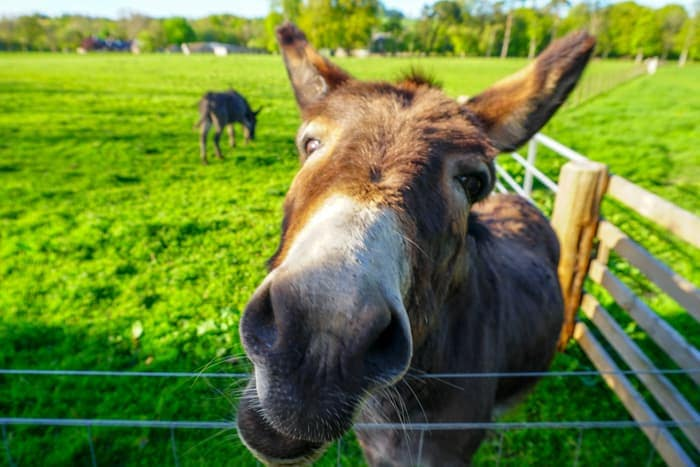 Donkey Sanctuary in St Boswells
