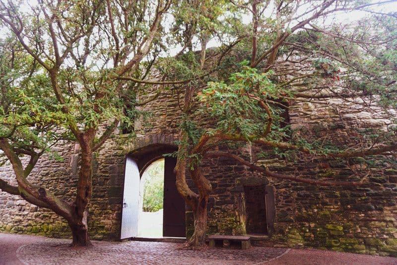 Craigmillar castle yew trees